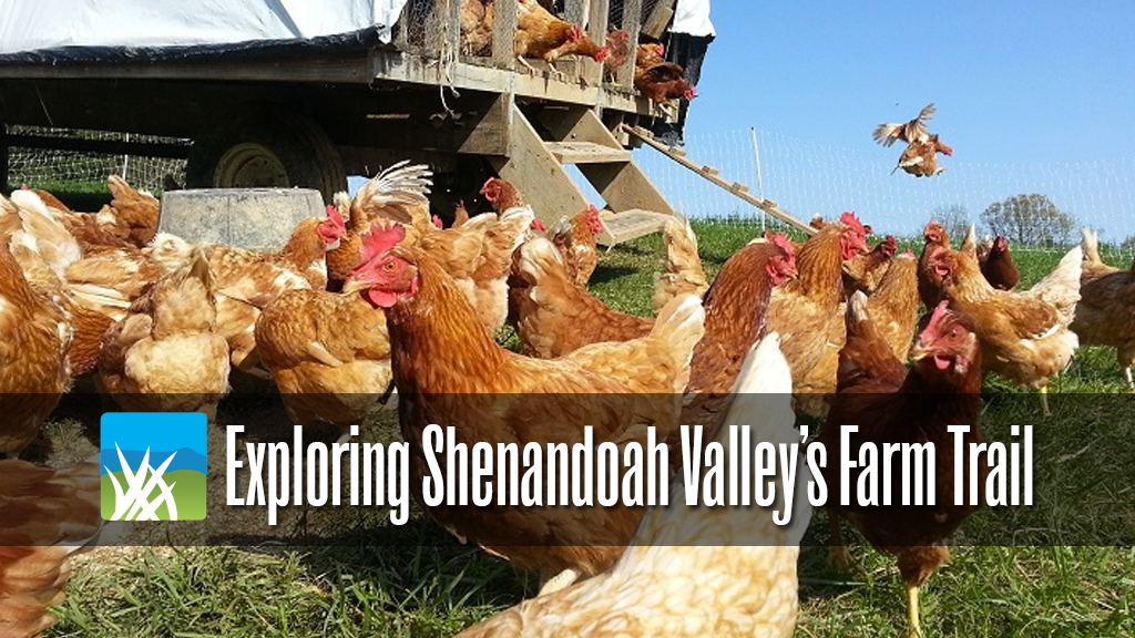 Exploring-Shenandoah-Valleys-Farm-Trail